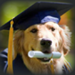 Dog Training School NY